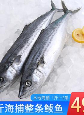 鲅鱼5斤海捕马鲛鱼青花鱼海鲜水产鲜活生鲜海鱼鲅鱼饺子食材