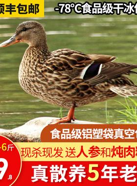 5年老鸭子肉现杀5-6斤整只新鲜冷冻农家散养土麻鸭水母鸭鸭货生鲜