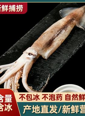 新鲜鱿鱼生鲜 鲜活冷冻大鱿鱼须 商用海鲜小管鱿鱼烧烤铁板好食材
