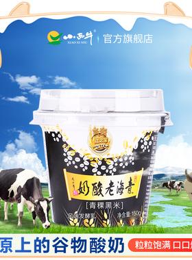 小西牛 青稞黑米老酸奶藏之宝高原谷物酸奶青海特产 150g*12杯